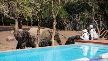 safari-hotel
