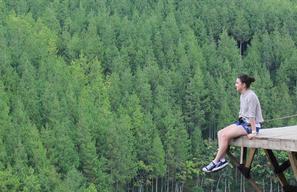 Hutan Pinus The Lodge Maribaya