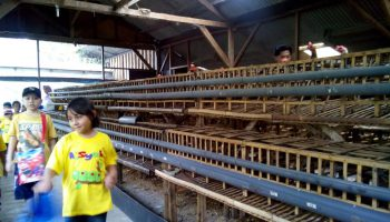 Mengasah Kecerdasan Naturalis Anak di Jendela Alam Bandung