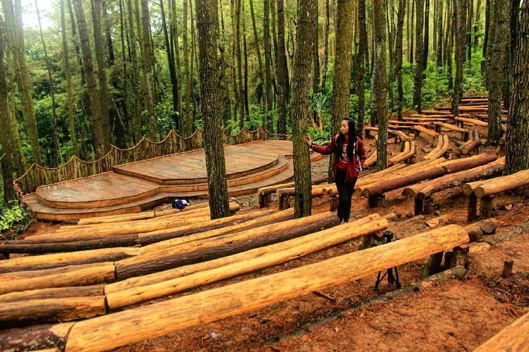 hutan-pinus-imogiri-bantul-4-1