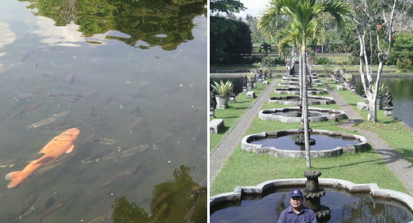Ikan mas yang bisa kita lihat dengan mata telanjang karena airnya sungguh jernih, dan saya berfoto di taman dekoratif di sisi kiri Tirta Gangga (Sumber: dokumen pribadi)