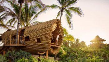 Penginapan rumah pohon di meksiko