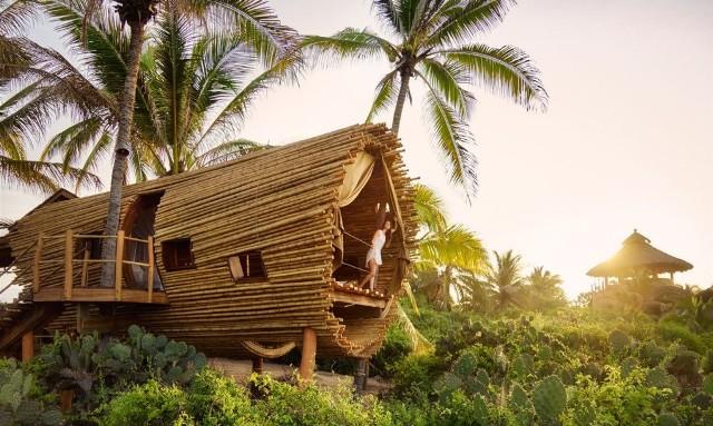 Siapa Sangka? Rumah Pohon yang Sederhana Ini Memiliki Isi yang Sangat Luar Biasa!