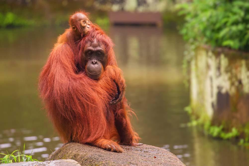 Kebun Binatang Bandung, Tempat Liburan Paling Asik untuk Keluarga