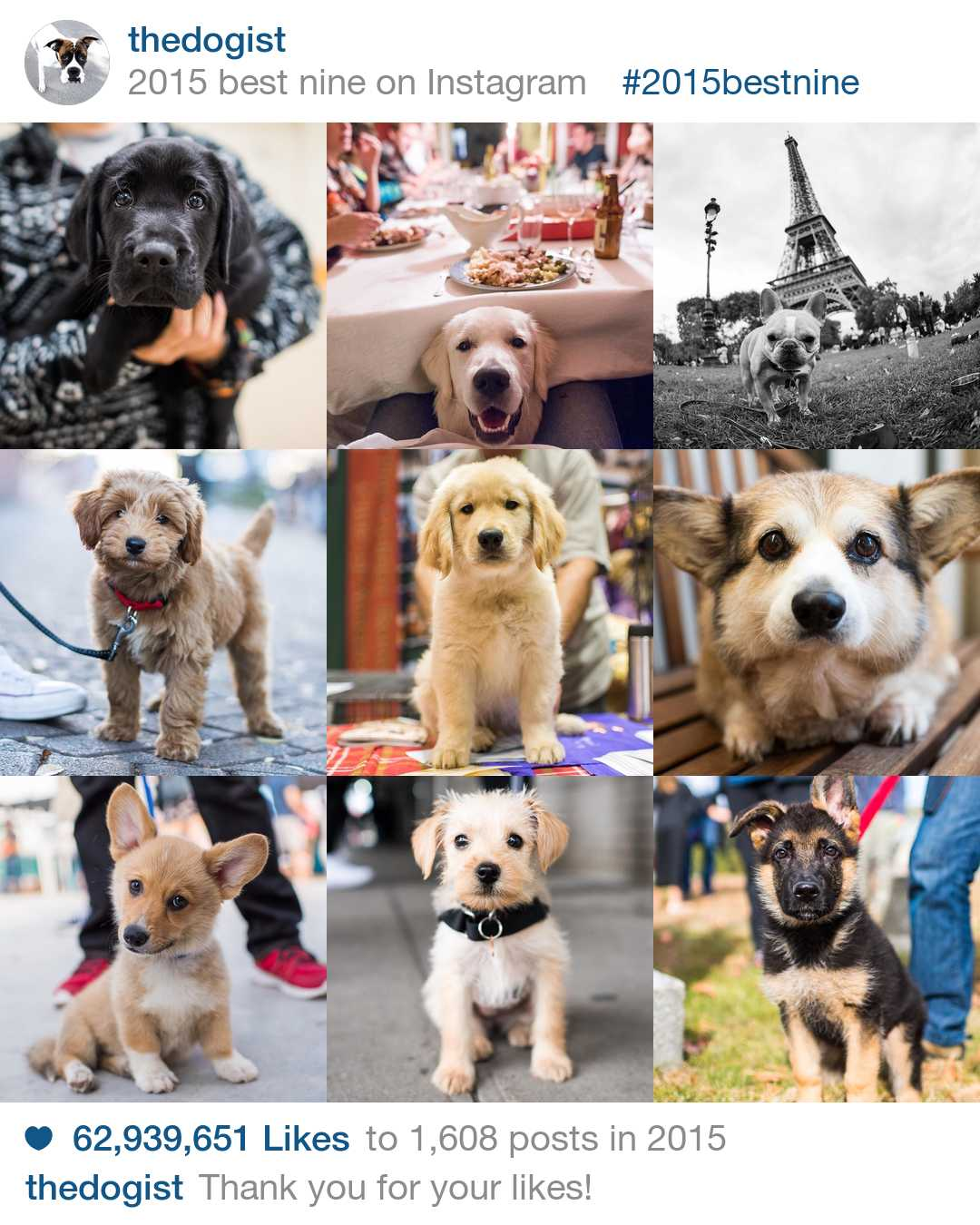 thedogist_full