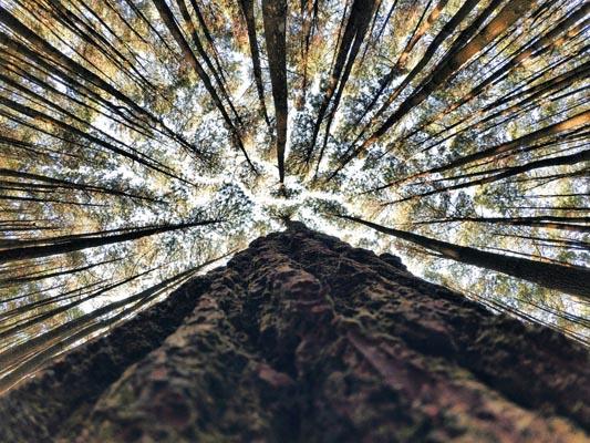 hutan-pinus-bantul