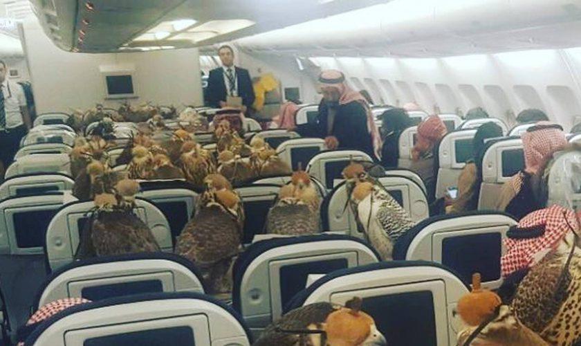 burung dalam pesawat