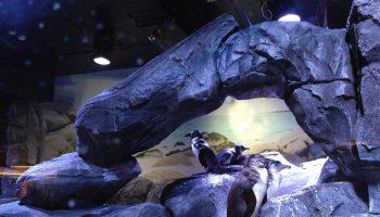 jakarta aquarium106