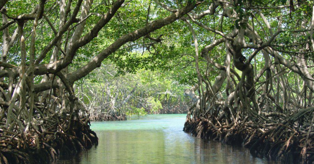 """Menjelajah """"Mangrove Lahundape"""" Objek Wisata Baru di Pusat Kota Kendari"""