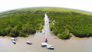hutan mangrove bedul 2