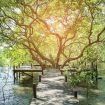 illustrasi-hutan-mangrove