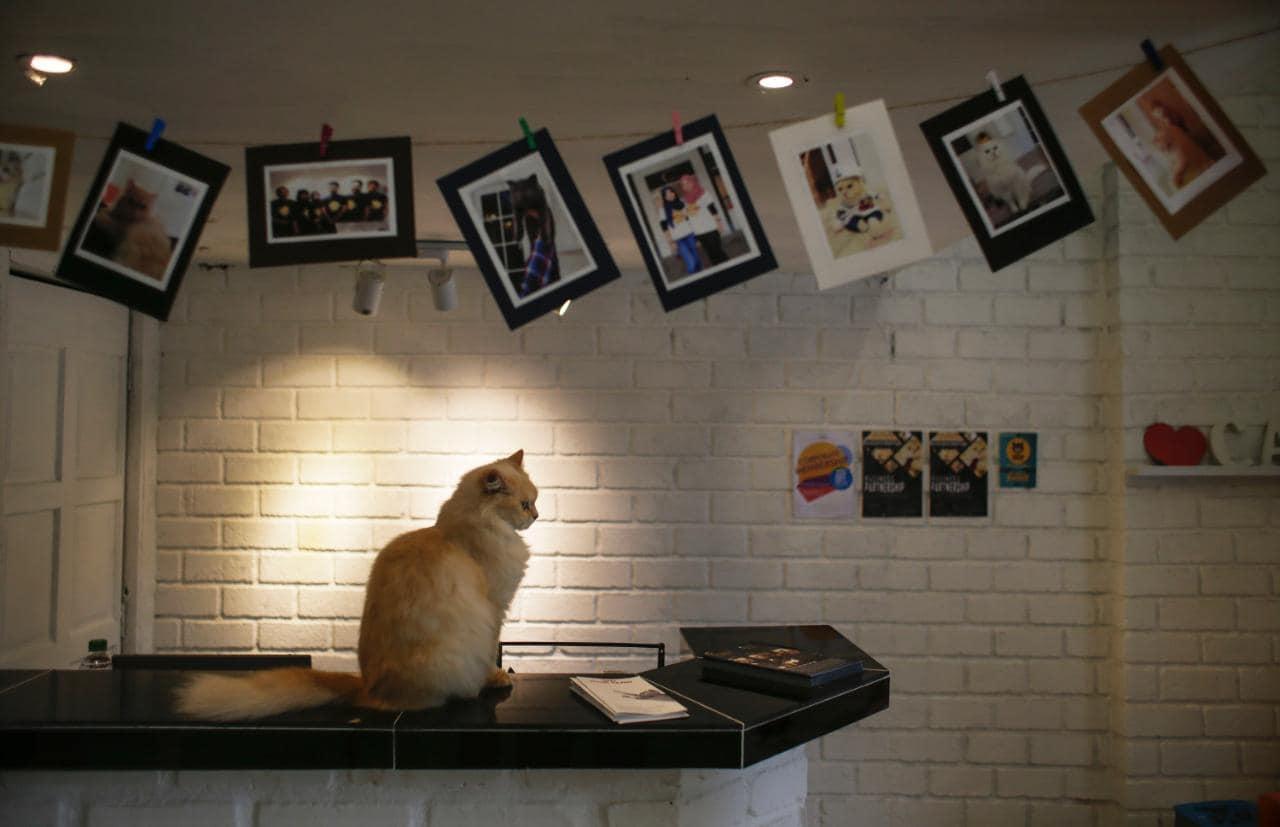 Hotel Unik untuk Kucing ini Benar-benar Mewah Sekali!