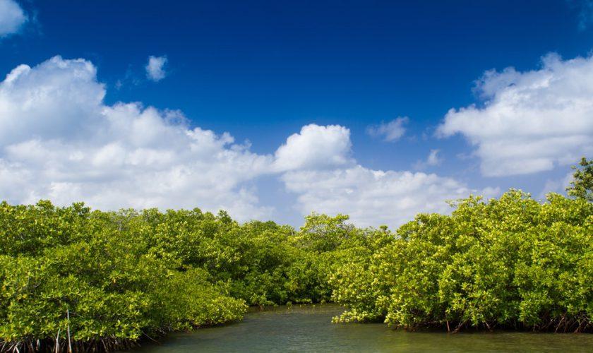 hutan mangrove singkawang