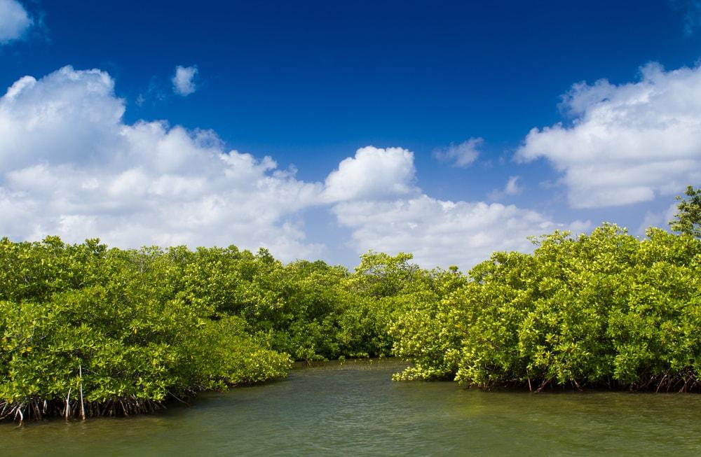 Hutan Mangrove Singkawang, Harta Karun Tersembunyi di Kalimantan Barat