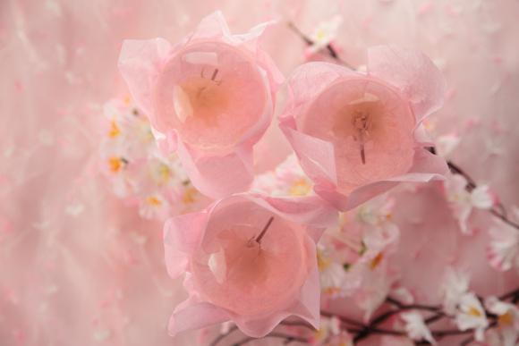 Jelly Sakura