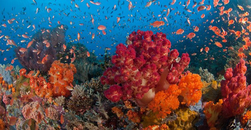 terumbu-karang-raja-ampat-rusak