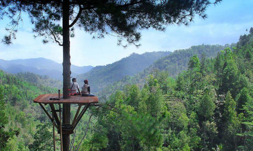 Pinus Kita Pacitan