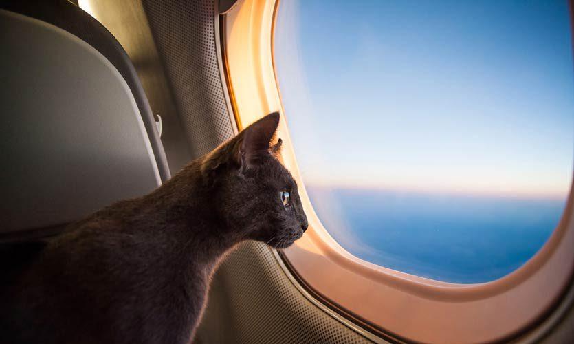 kucing-di-pesawat