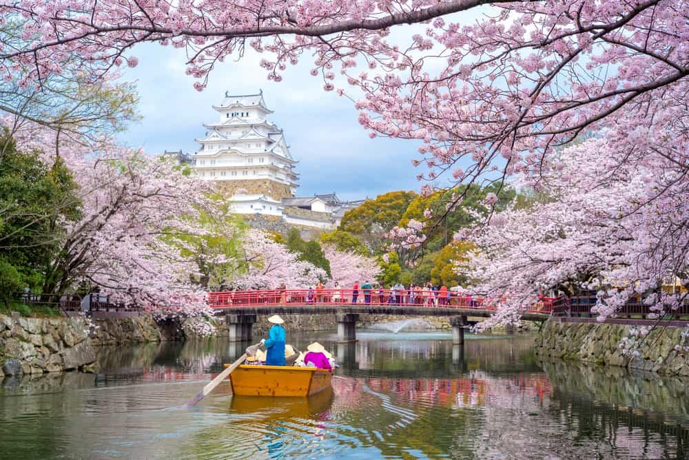 Merayakan Musim Semi di Jepang? Ini Hal yang Wajib Kamu Perhatikan