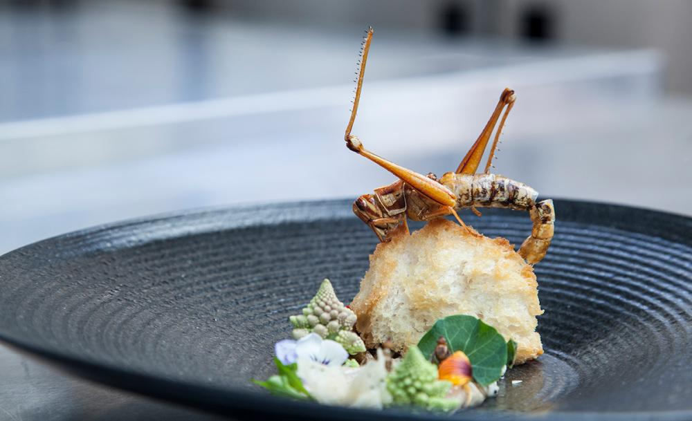 Restoran Serangga Pertama di Bangkok, Berani Coba?