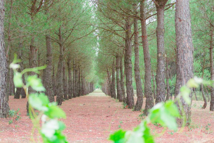Memacu Adrenalin di Taman Pinus Bondosari, Tempat Wisata Baru di Malang yang Cantik dan Asri
