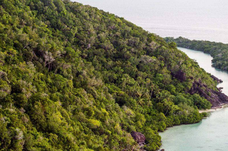 hutan alami pulau bawah