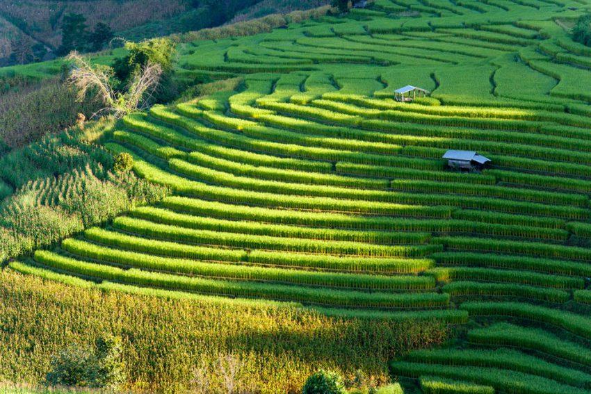 7 Tempat Wisata di Ubud Ini Jadi Favorit Traveler Mancanegara Lho