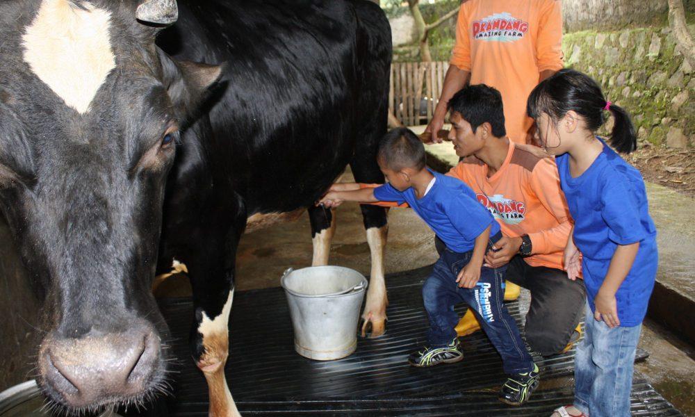 D'Kandang Amazing Farm, Destinasi Wisata Keluarga yang Seru di Depok