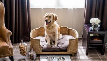 hotel ramah anjing di London