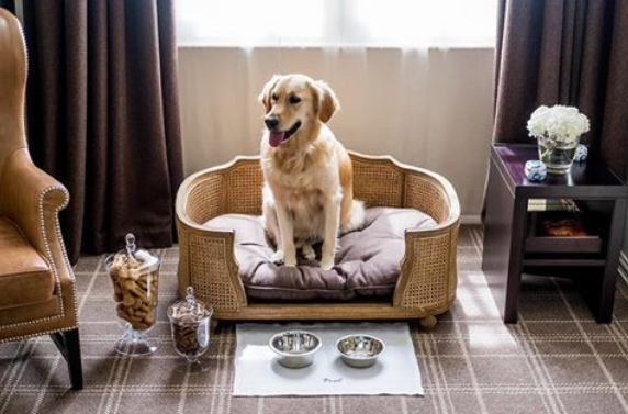 hotel ramah anjing di London