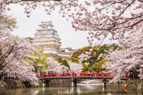 Inilah Tempat Terbaik di Jepang untuk Menikmati Sakura