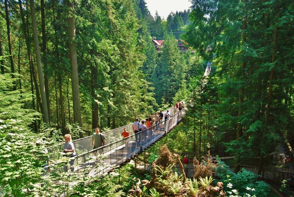 Forest Walk Babakan Siliwangi, Tempat Wisata Baru di Bandung yang Sejuk dan Indah