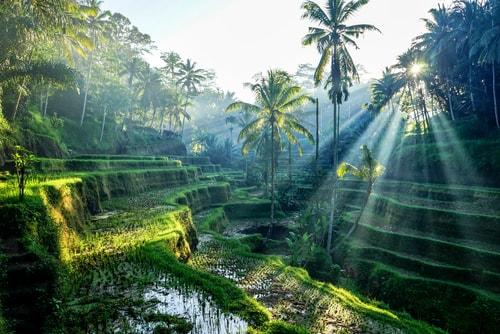solo traveling ke ubud