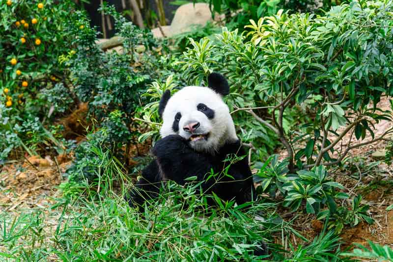 5 Objek Wisata Singapura yang Sayang untuk Dilewatkan