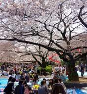 ueno-park1