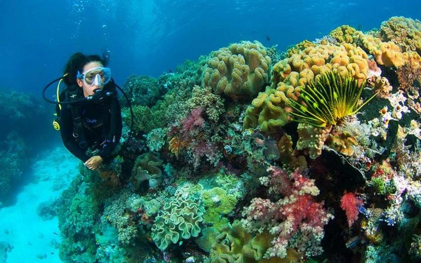 Pemandangan Laut Pulau Kaledupa yang Sayang untuk Dilewatkan