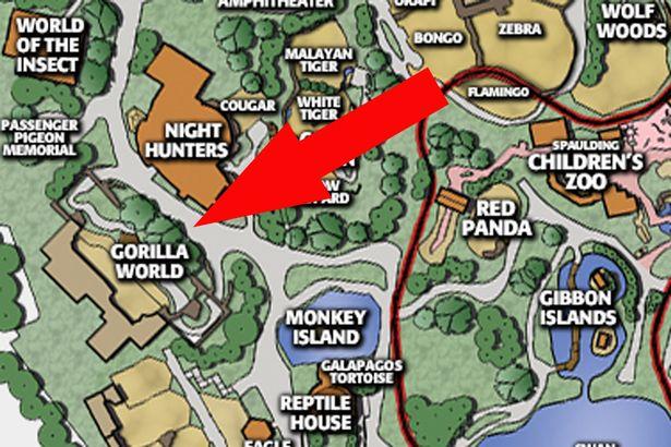 Peta kandang gorila di kebun binatang Cincinnati Amerika