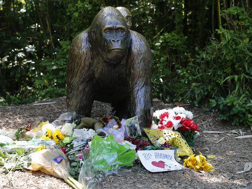 Terungkap! Gorila 'Harambe' Terlihat Mengenggam Tangan dan Melindungi Anak Ini Sebelum Ditembak Mati