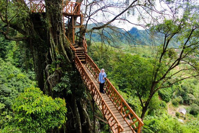 Punya Rumah Pohon Curug Ciherang Bogor Dibanjiri Pemburu Selfie