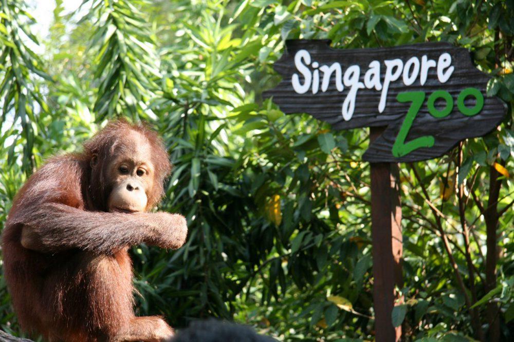 5 Tempat Wisata di Singapura Yang Sering Dikunjungi Para Wisatawan