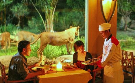 Sensasi Makan Siang Dengan Singa di Restoran Bali