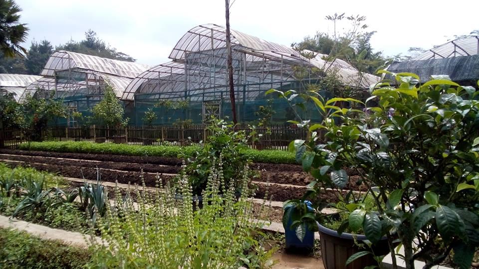 Berbagai jenis tanaman di jendela alam