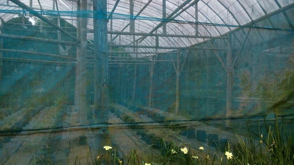 Tanaman hidroponik di Jendela Alam