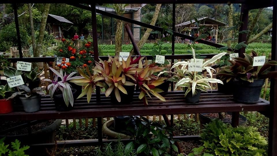 Berbagai tanaman obat dan hias di Jendela Alam