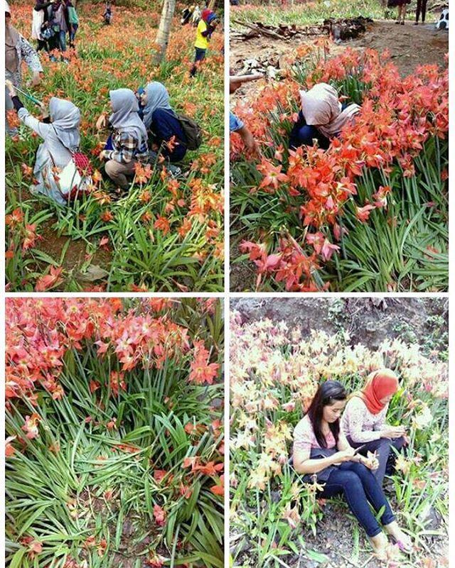 Kebun Bunga Puspa Patuk Rusak Demi Foto Selfie Keren Image Facebook