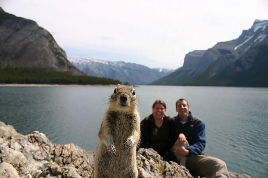 Aksi Lucu Hewan yang Ikut Selfie Saat Liburan!
