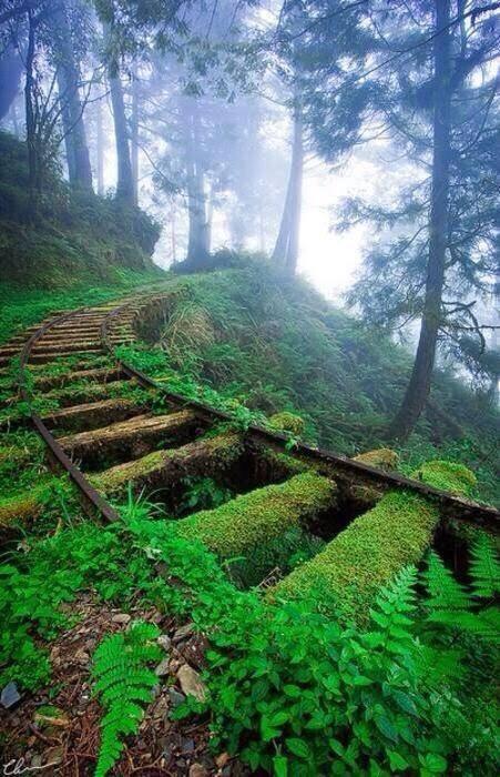 jalur-kereta-api-yang-telah-ditinggalkan-di-taipingshan-sebuah-hutan-nasional-di-taiwan