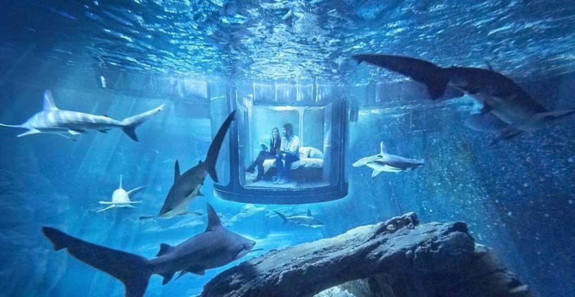 Kamar Underwater Unik Ini Dikelilingi Hiu Ganas, Mau Tidur di Sini?