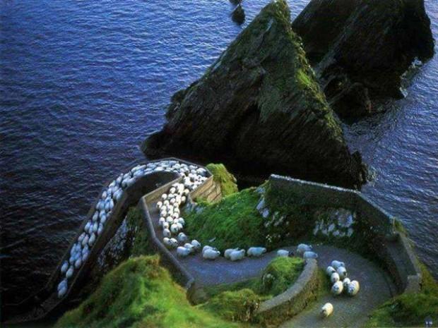 Sheep Highway (youramazingplaces.com)