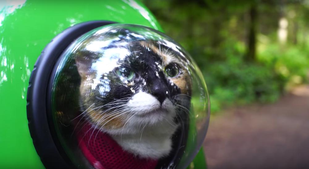 Keren, Tas Ini Bisa Membuat Kucingmu Bebas Ikut Traveling Bersamamu